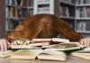 Most Common Challenges Students Face in College