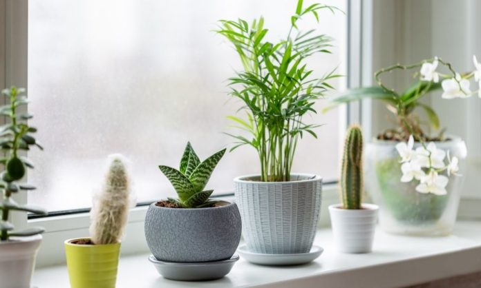 How To Maximize Window Space for Plants